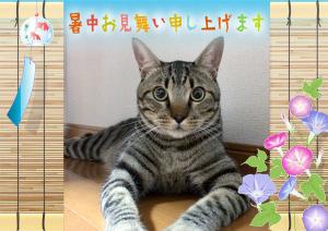 4571 - ナノキャリア(株) ニャムニャム 遅くなったニャム🐾