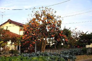 花と共に・・・ 秋の風物詩