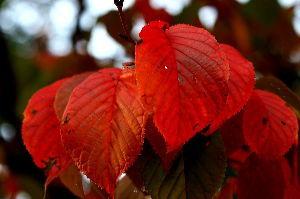 花と共に・・・ 此処もあと一ヶ月チョッと、ヤフーは儲からない所は直ぐ封鎖するから・・・  色付く葉っぱ