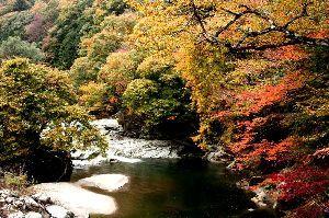 花と共に・・・ 秋の夏井川渓谷、