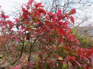 花と共に・・・ 近いところで冬タイヤに交換しなくては  紅葉するマユミ