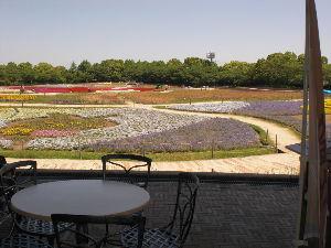 (^ェ^)(^ェ^)あなたと・・ かな さん 当地の「なばなの里」(三重・桑名市)写真でご紹介して頂き ありがとう~。      5月