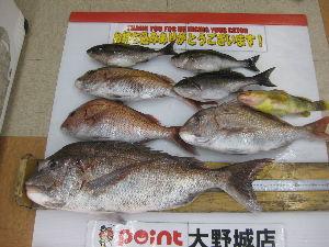 鯛ラバ 真鯛75センチ