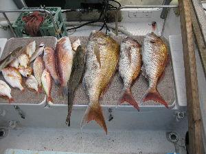 鯛ラバ 真鯛83、65、60、あ真鯛、60、45、マゴチ、60、レンコ、二神