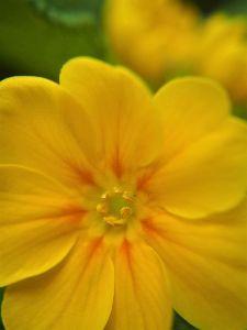 かわいい草花とアンティーク 個別に大写しを。やっぱりどアップが好きですー。