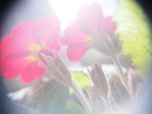 かわいい草花とアンティーク プロの気持ちになって。 裏側から撮る。