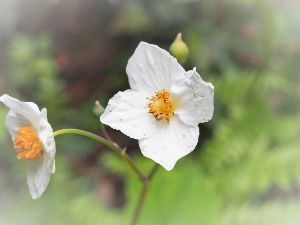 かわいい草花とアンティーク たしか、ウメバチソウやったと思うんですが~。