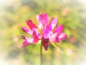 かわいい草花とアンティーク レンゲ。