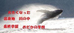 6787 - (株)メイコー 明日は雲抜けですか。 数々の荒波を乗り越えて、パシフィックブルーを堂々と泳いでね。
