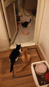 電気ガマを寝床にした黒猫 黒猫を狙う二匹。
