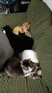 電気ガマを寝床にした黒猫 寒くなるとみんなで一緒に。