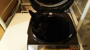 電気ガマを寝床にした黒猫 寝床にしてしまった黒猫れんちゃんです。