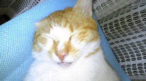 電気ガマを寝床にした黒猫 耳がかたほう