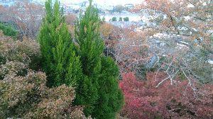 博打の雑談部屋 京都は嵐山と伏見稲荷にいきましたが紅葉はまだまだでした。 新聞の恐怖恐怖の煽りが一気になくなりました