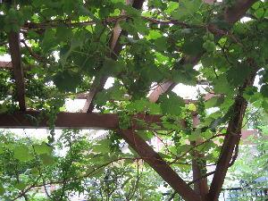 一番星見っけ・・・寂しい人集合 やっと、チータも眠りました。 紫露草も咲き始めてます。