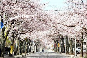 ホストクラブ で 豪遊する 女心を 透色分解する S 公園の桜