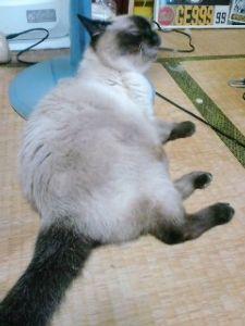 ゲイの人とお友達になりたい!女性です こんばんはー。 あらら、ワンコが熱中症でダウンとは心配だな~  僕のうちは、ネコを飼ってますー。 う