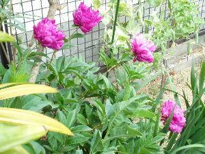 4849 - エン・ジャパン(株) 反転開!…確定!。 まっ赤に咲け、この花のように。