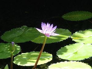 保存食 >蓮の花が、見事でしたね^^  そういえばグリーンセンター(入場料310円)にも 名前がわかりません