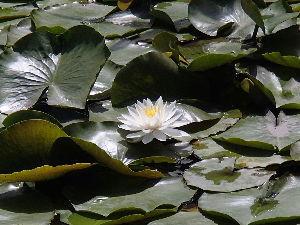 保存食 追加でいつも通る川口自然公園の釣り堀では、 蓮の花が、見事でしたね^^ 釣り人は目もくれないようでし