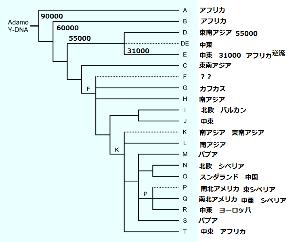Y-DNAで見る日本人のルーツ > > Pって比較的新しいハプロですから、Qも中央アジアに行ってからシベリア経由でアメリ