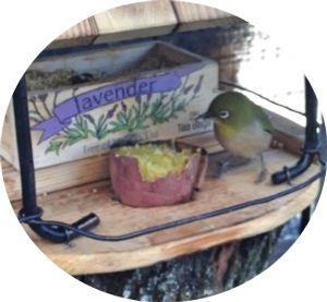 小さい野鳥だけのエサ場 無人ビデオで撮影して確かめたら、ヒヨドリ君は嘴を突っ込んでエサを取って食べるだけで、場内には入ってい