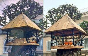 小さい野鳥だけのエサ場 右の写真がセキレイ メジロ 待ちの状況です。両鳥ともにミカンは大好物だと思いますので。