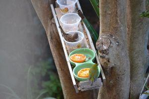 なんちゃって?「ひとり事」 毎日雀の餌やりには、並行していたが、やっと待望にメジロが遣って来た メジロは蜜柑が大好きに様で、雀の