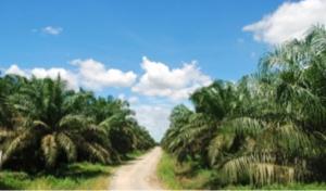 9318 - アジア開発キャピタル(株) パーム油は食品や洗剤など、いろいろな製品に使われているけど、パーム椰子のプランテーションは環境破壊に