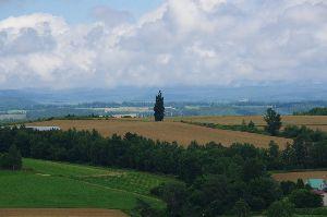 いつだって、そばにいるからね♪ おはようございます\(^^)/ 富良野 昔のスカイラインケンとメリーCMの木です。