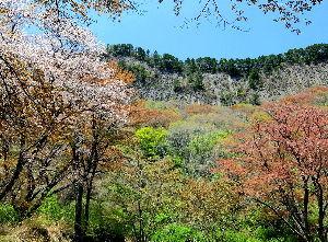 いつだって、そばにいるからね♪ 御無沙汰してます。^^; 私の地方では桜のシーズンも終わり新緑へと季節が移り替わり つつあり、何をす