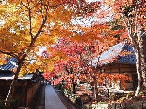 いつだって、そばにいるからね♪  こんばんは!! 私も少し遅いかな~と思ったのですが、滋賀の永源寺に行って来ました。 紅葉としては綺