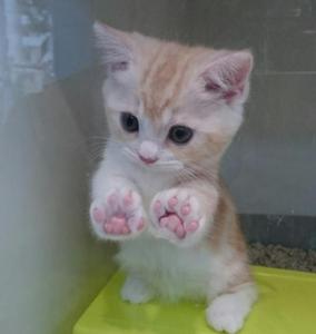 猫カテの特殊性について みなさん、こんにちは。可愛いねこちゃんの写真を張りますね。