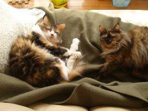 猫カテの特殊性について 我が家の最初の計画では、柴犬を買う予定でした。  それが何故か、猫の額の庭を、先に猫たちの遊び場にし
