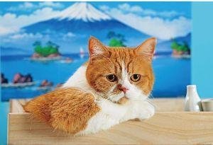 猫カテの特殊性について ワイモバイルCMの ふてニャンの 中の   春馬くんです(スコティッシュフォールド)