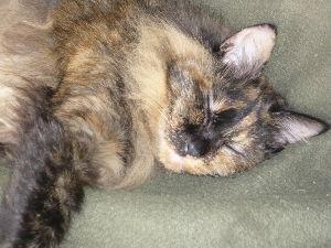 猫カテの特殊性について 猫は顔じゃない!  度胸と愛嬌で決まる。  庭で倒れて、8年と4年。 先代の「小太郎」(ノルジャン雑