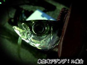 神奈川投げ釣クラブ https://blogs.yahoo.co.jp/sagaminotsurisi2/3592769