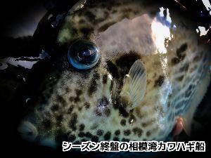 神奈川投げ釣クラブ https://blogs.yahoo.co.jp/sagaminotsurisi2/3605010