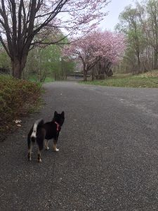 おじさん、おばさんの休憩所 朝の散歩