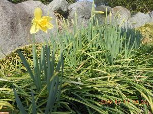 広い宇宙の何処かに ♬咲いた咲いた 赤白黄色~♬ 春だね~ アノ子 10月生まれだったけど 名は春子だったなぁ~ 孫 何