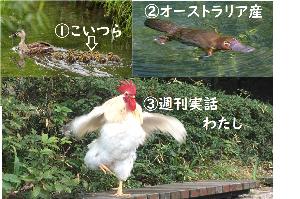 3397 - (株)トリドールホールディングス ふと思う、鴨すきうどん💛  カモ💛捕まえるため 大勢のマタギ雇うとるんかのぉ~ カモ♬捕まえて食って
