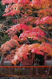 ☆金澤とことこ☆ 管理人が人に影響を与えやすいらしいので一席。個人的には海住山寺の紅葉が素晴らしかったです。シラコさん