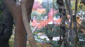 心を空っぽにして おばんどすぅ~~(^^)/ 皆様秋を満喫されてよろしおす。。。  写真に撮るとうまくうつりまへん(&