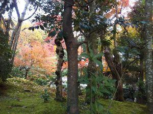 心を空っぽにして おはようさんどすぅ(^^)/ 今日はよい天気どすぅ~~~  師走の忙しさに~~前の写真は二条城隣の神