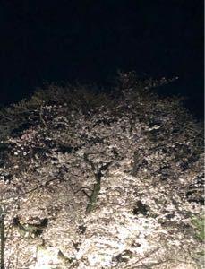 エレカル 別館 場中なのでこっちに 夜桜