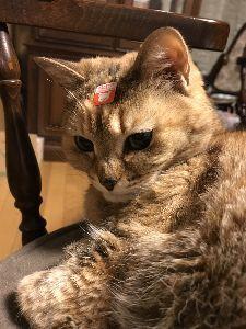 はばたけ!ネオロマ学園★ 前回の書き込みが8月末だった!ヤベーヤベーヽ( ̄д ̄;)ノ=3=3=3 夏頃に体調崩した猫が今、再度