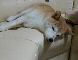 がらくた部屋 おやすみ^^/