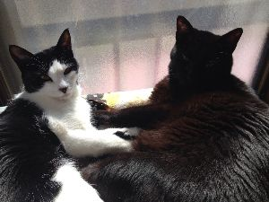 ネコが好きですが、なにか? ただ今、萌え萌え中で~~(((^_^;)  切ない声出して廊下を走り回ってます。  タマなし兄ちゃん