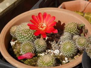 サキュレント 種から5年! 初めての開花