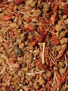 サキュレント サボテンが発芽